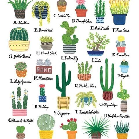 Love This Succulent And Cactus Alphabet Chart From Lilykaodesign