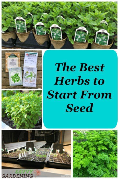 The Best Herbs To Start From Seed For Garden Beds Pots In 2020