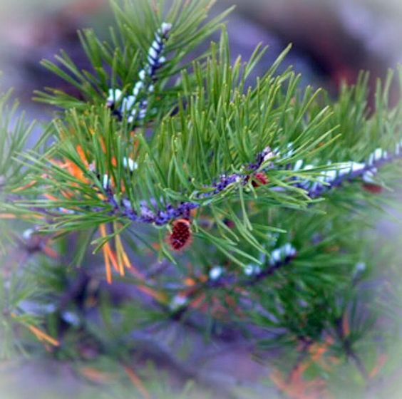 Christmas Tree History Pagan: Yule, The Soul And Pagan On Pinterest