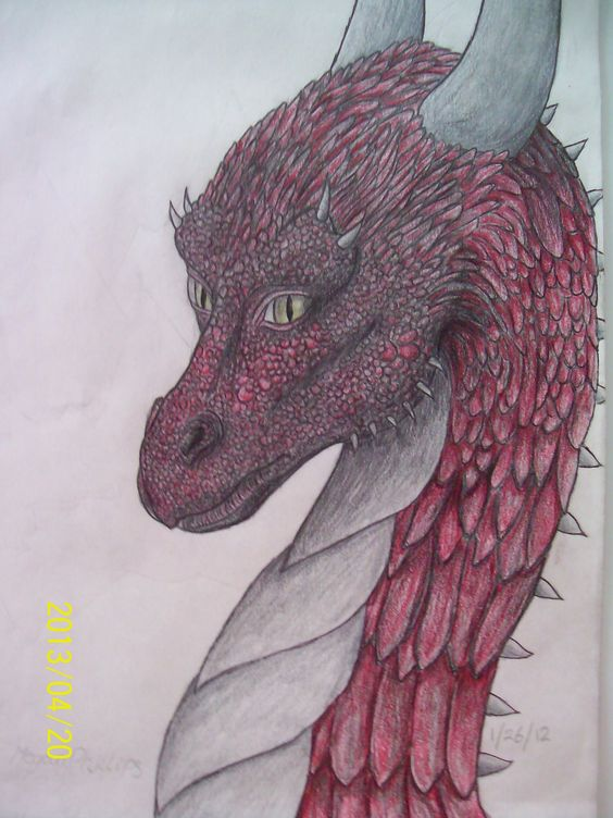 1/26/12 drawing of dragon on Eragon book cover