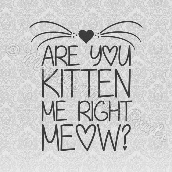 Are You Kitten Me Right Meow? SVG Quote