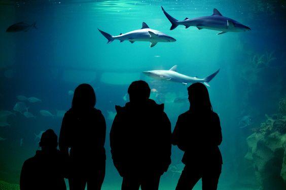 Greater Cleveland Aquarium 2000 Sycamore Street