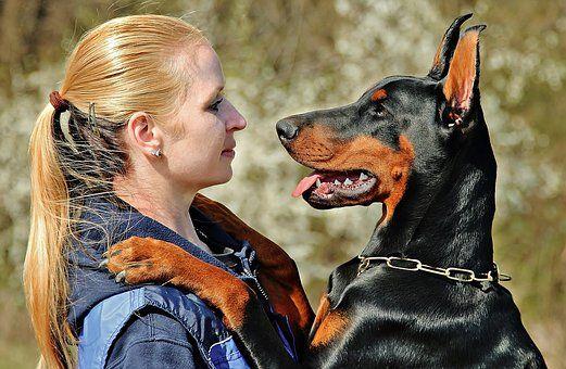 Doberman Dog Hug Love Training Your Dog Dogs Dog Love