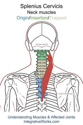 Understanding Trigger Points - Stiffness at the base of the neck when turning the head