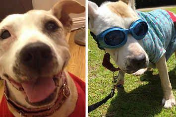 This Rescue Dog's Life And Last Days On Earth Are Heartbreakingly Perfect