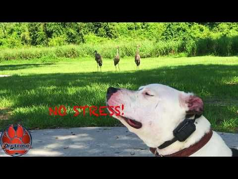 For The Best Dog Trainer In Winston Salem Nc Call Off Leash K9 Dog