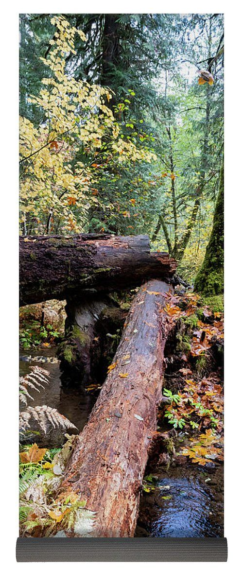 Logs create a bridge over a stream in the forests of the