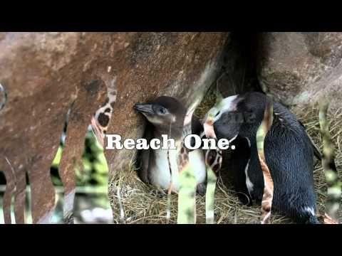 EACH ONE REACH ONE - YouTube