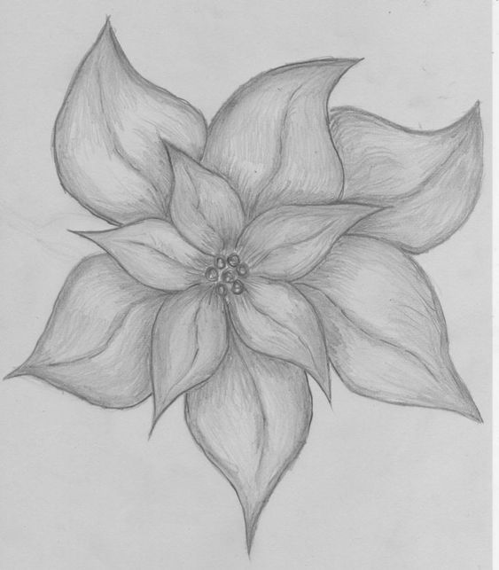 Flower Drawing Easy Flower Pencil Drawing Visit My Youtube Channel To Learn More Drawing Pencil Drawings Of Flowers Easy Flower Drawings Pencil Art Drawings