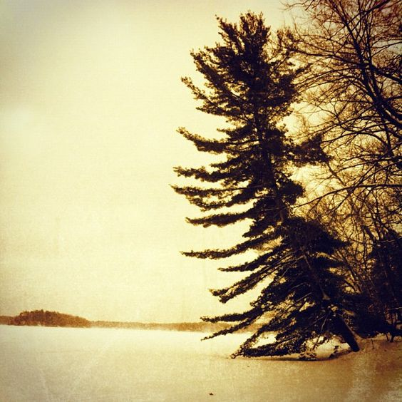{winter} Island view from the lake...