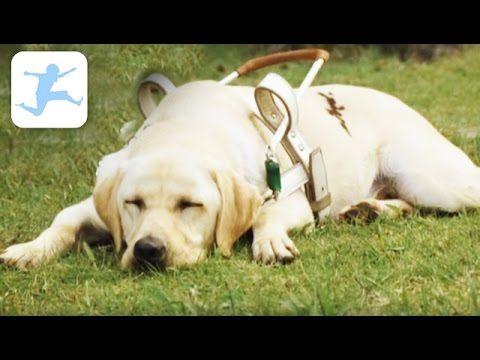 Quill Ein Freund Fur S Leben Ganzer Kinderfilm Tierfilm Deutsch Hund Kinderfilme Kostenlos Youtube Kinder Filme Kinderfilme Kinderfilm