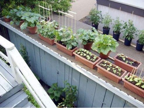 Rooftopgarden Rooftop Garden Party In 2020 Rooftop Garden Modern Garden Roof Garden Design