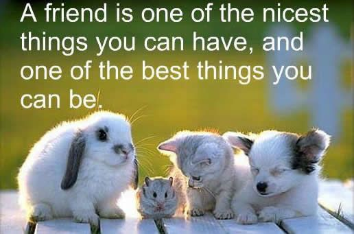 Image result for friendship quotes with animals