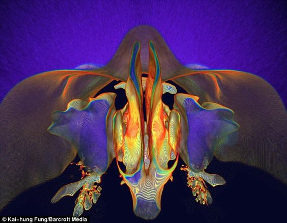 What lies beneath: Radiologist Kai-hung Fung uses a CT scan to capture this amazing image of the back of a human nose