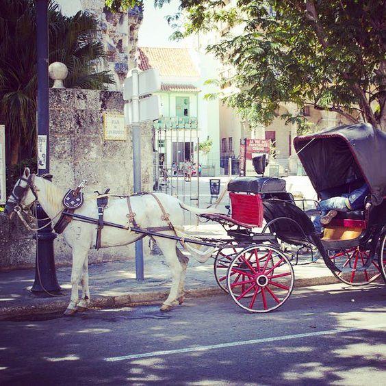 Cozy carriage ride through the streets of #Havana! #Cuba #visitcuba #cubatourism #cubatravel #travelcuba #caribbean #caribbeanvacation #caribbeanholiday #habana #visithavana #travel #tourism by caribbeancasas