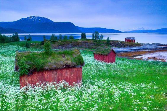 Quando cresce uma casa no... jardim: 21 espetaculares vivendas integradas na natureza