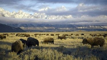 Video Gallery for America's National Parks - National Geographic Channel