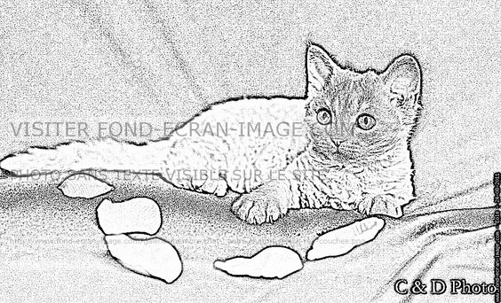 Imprimer Coloriage Chaton Selkirk Rex Couchee