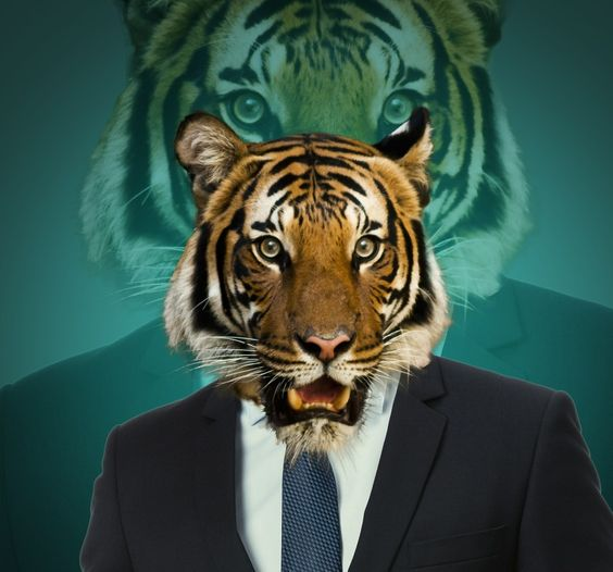 Sr. Tigre #lagloriaedeDios#shadowghiphope21 #photoshop #montaje #comico #tigre