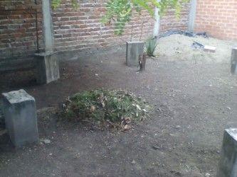 Segundo día de limpieza patio UMATA. PODA DE ÁRBOLES. PODA DEL CÉSPED. RECOGIDA DE SOBRANTES VEGETALES mes de junio