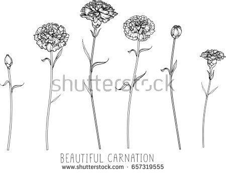 Carnation Flowers Drawing And Sketch With Line Art On White Backgrounds Carnation Flower Tattoo Carnation Tattoo Small Flower Tattoos