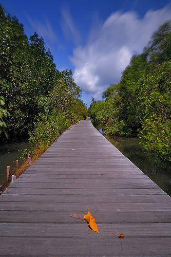 boardwalk in mangrove forest, Bali, Indonesia - ponton mangrove