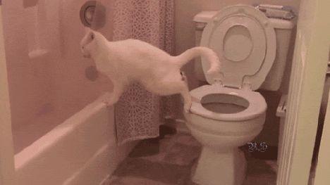 Enseñas al gato a ir al baño y... bueh