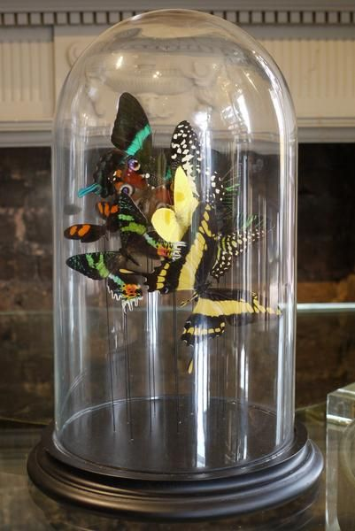 Butterflys in a Bell Jar