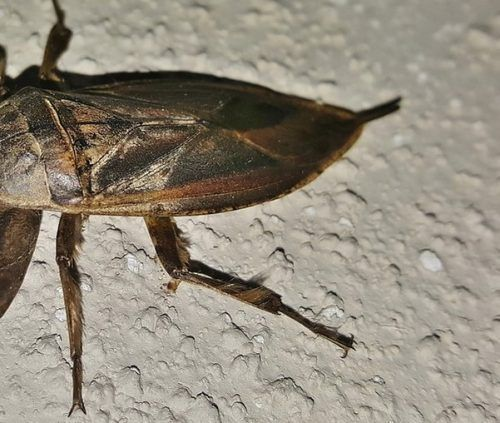 How To Get Rid Of Waterbugs In An Apartment Get Rid Of Waterbugs How To Get Rid Cockroaches