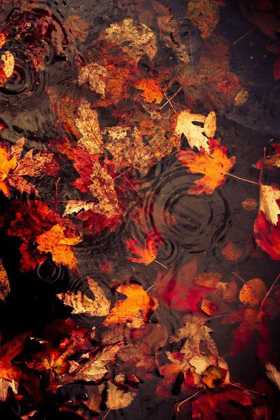 Bunte Blätter im Regen.