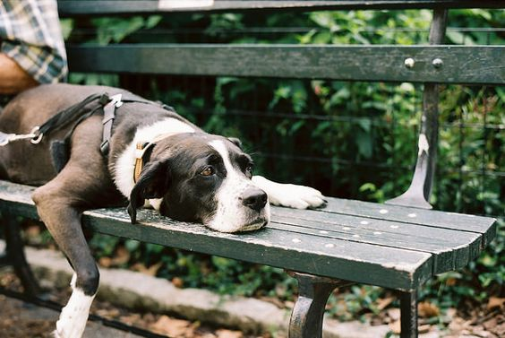 "aphelia: "" dog days in the park by oceanerin on Flickr. """