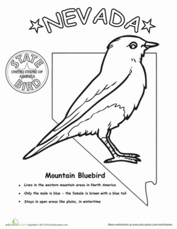 First Grade Animals Life Science Worksheets Nevada State Bird Nevada Nevada Nevada Day Nevada Nevada State