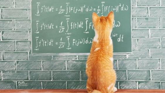Cats Understand Basic Laws Of Physics, According To Study | IFLScience