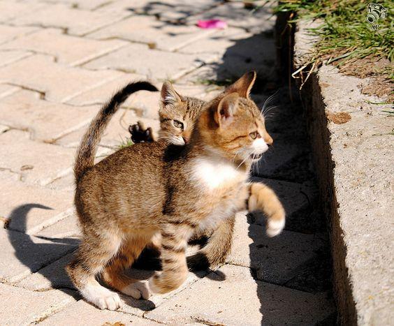 Cat play 9 by aljabak85, via Flickr