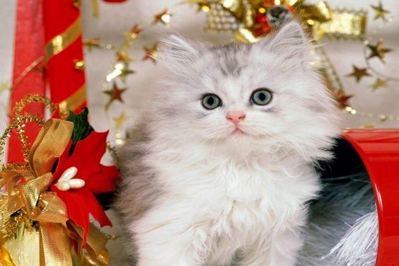 Un bonito gato entre la decoración de Navidad