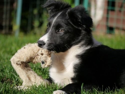 10 Puppy Teething Survival Tips And Best Solutions Puppy