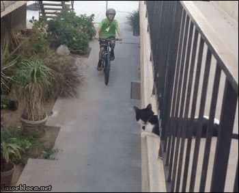 """betarev3:  pedalfromhell:  """"HIGH FIVES""""  Dude….."""
