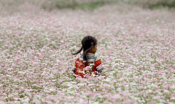 Festival da flor Vietnam Casa Rosa!!!