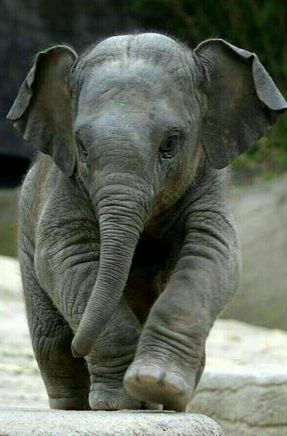 Cute baby elephant https://presentbaby.com