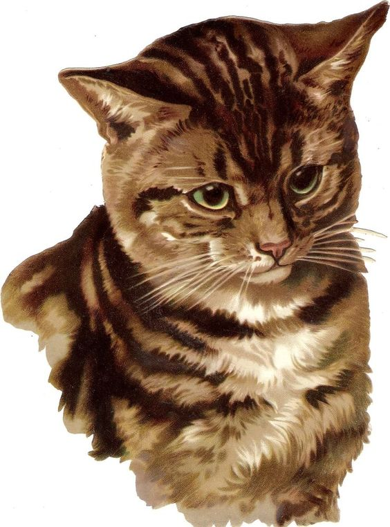 Oblaten Glanzbild scrap die cut chromo Katze  XL 23,5cm tiger cat head Kopf: