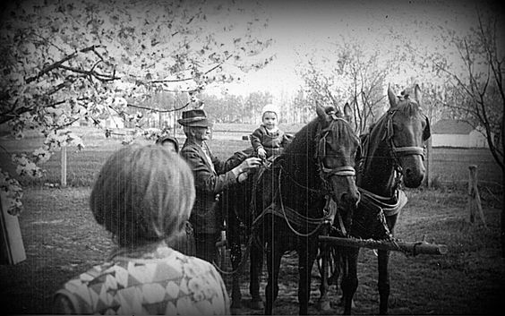 Spring, hourses, baby and grandpa, Sombor, old photo.