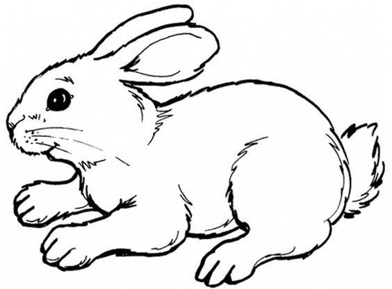Malvorlagen Tiere Malen Kostenlose Vorlagen Zum Ausmalen