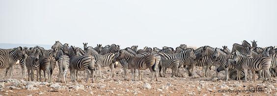 Stripes Stripes and More Stripes  !!!! by Judylynn Malloch - Photo 169945117 / 500px