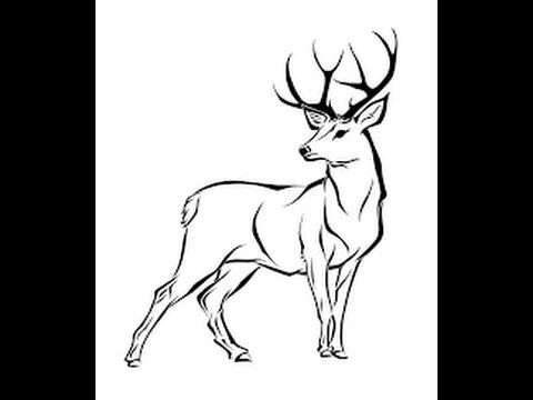 Stock Vector Deer Drawing Deer Drawing Easy Deer Illustration