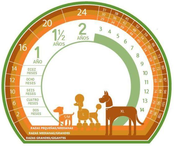 Infográfico com a idade relativa dos cães