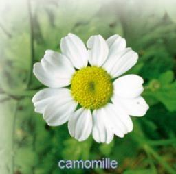 Toutes les fleurs comestibles (liste très fournie + saveurs et usages)