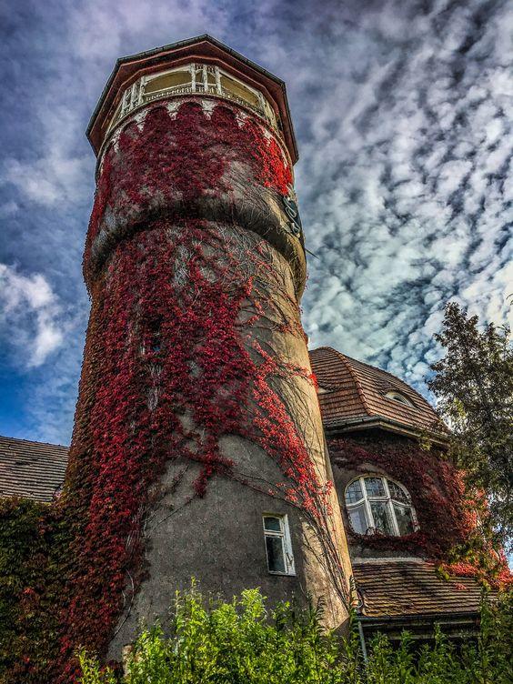 Водонапорная башня в Светлогорске в осеннем одеянии. Фото Жени Шведы