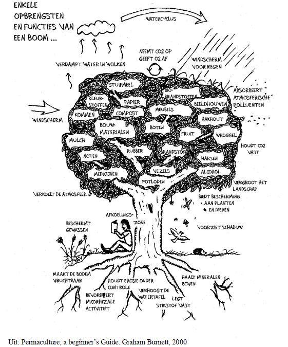 In permacultuur staat de boom op een belangrijke plaats, centraal zelfs in het logo. Een boom heeft immers heel veel functies. Op de tekening hieronder kan je er een aantal aflezen. Een boom levert heel veel materialen zoals voedsel, brandhout, vezels, timmerhout, mulch, medicijnen, en dergelijke. Maar daarnaast levert hij ook heel wat diensten. Hij …