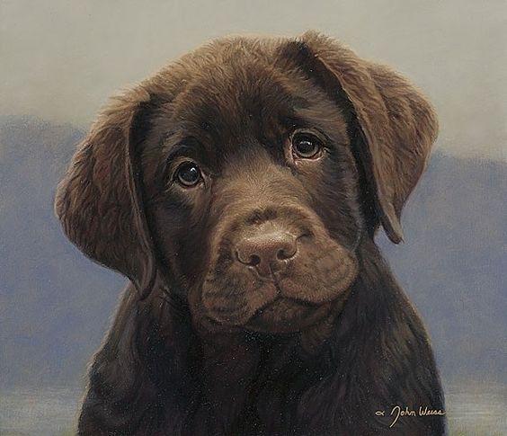 chocolate lab puppy!.