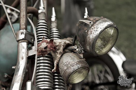 jokers-2011-roadkill by tatobram, via Flickr
